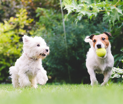 Bonding activities that every dog loves